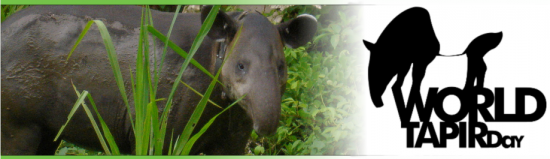 World Tapir Day